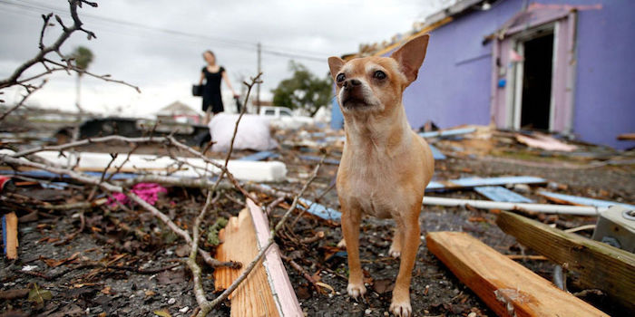 dog in disaster